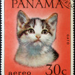 PANAMA - CIRCA 1980: A stamp printed in Panama shows a cat, circa 1980 — Stock Photo