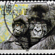 Stock Photo: GERMANY - CIRC2001: stamp printed in Germany, shows Mountain gorilla, circ2001.