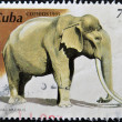 A stamp printed in Cuba dedicated to the Havana Zoo, shows a elephant maximus — Stock Photo