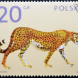 Stamp shows a cheetah — Stock Photo
