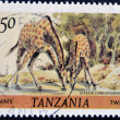 Stamp shows giraffes — Stock Photo