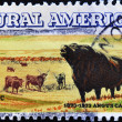 Stamp shows angus cattle in reference rural america — Stock Photo