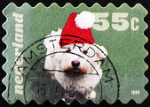 HOLLAND - CIRCA 1999: A stamp printed in Holland shows a dog with a santa hat, circa 1999 — Stock Photo