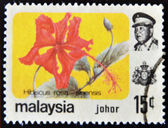 MALAYSIA-CIRCA 1985:A stamp printed in Malaysia shows Hibiscus rosa - sinensis, circa 1985. — Stock Photo