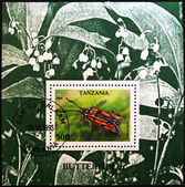 TANZANIA - CIRCA 2006: A stamp printed in Tanzania shows butterfly, Zygaena laeta, circa 2006 — Stockfoto