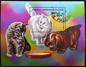 Stamp shows cats — Stock Photo