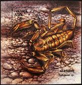 Pieczęć pokazuje skorpion, hadogenes — Zdjęcie stockowe