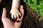 Father and daughter hands play with soil in the garden — Стоковое фото
