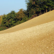 Field sown with wheat in Tuscany hill farmlands — Stock Photo #7344280
