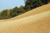 Field sown with wheat in Tuscany hill farmlands — Stock Photo