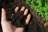 Man hand with soil in the garden — Stock Photo