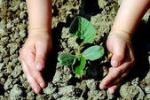Kid hands plant a seedling in the garden — Stock Photo