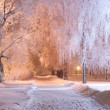 Night winter landscape — Stock Photo #7247004