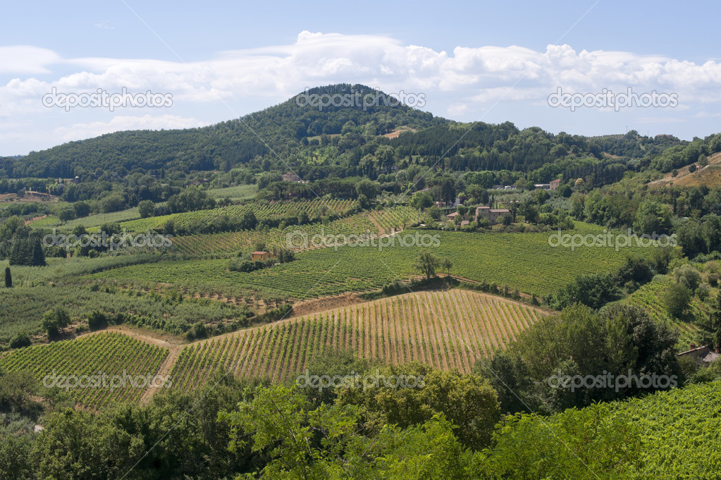 Landscape with vineyards at summer near Montepulciano (Siena, Tuscany, Italy) — Stockfoto #6836593