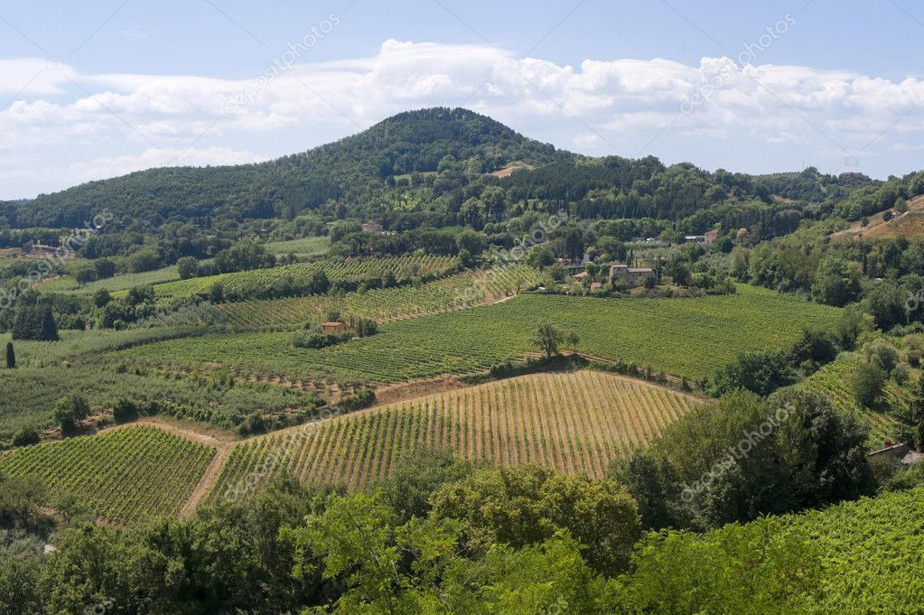 Landscape with vineyards at summer near Montepulciano (Siena, Tuscany, Italy)  Foto Stock #6836593