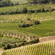 Landscape with vineyards at summer near Montepulciano (Siena, Tu - Stock Photo