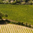 Стоковое фото: Landscape with vineyards at summer near Montepulciano (Siena, Tu
