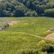Landscape with vineyards at summer near Montepulciano (Siena, Tu — Lizenzfreies Foto