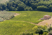 Landscape with vineyards at summer near Montepulciano (Siena, Tu — Stock Photo