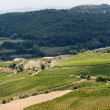 Landscape with vineyards at summer near Montepulciano (Siena, Tu — 图库照片