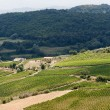 Landscape with vineyards at summer near Montepulciano (Siena, Tu — Stock Photo #7035543