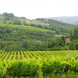 Royalty-Free Stock Photo: VIneyards of Chianti (Tuscany)