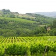 VIneyards of Chianti (Tuscany) — Foto de Stock