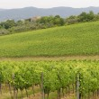 VIneyards of Chianti (Tuscany) — Stock Photo #7068765