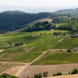 Landscape with vineyards at summer near Montepulciano (Siena, Tu — Stockfoto #7088657