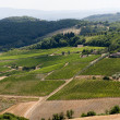 Landscape with vineyards at summer near Montepulciano (Siena, Tu — ストック写真 #7088657