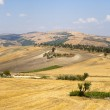 Landscape in Basilicata (Italy) near Acerenza at summer — Stock Photo #7088663