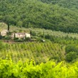 Chianti (Tuscany), old farmhouse - Foto Stock