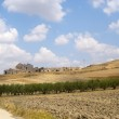 Between Puglia and Basilicata (Italy): Country landscape at summ — Stock Photo #7102628