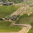Stok fotoğraf: Landscape with vineyards at summer near Montepulciano (Siena, Tu
