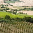 Landscape with vineyards at summer near Montepulciano (Siena, Tu — Foto de Stock