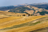 Landscape in Basilicata (Italy) near Forenza at summer — Stockfoto