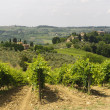 VIneyards of Chianti (Tuscany) — Stock Photo #7166218