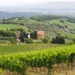 Stock Photo: VIneyards of Chianti (Tuscany)