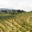 Hills in Tuscany near Artimino — Stock Photo