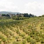 Hills in Tuscany near Artimino — Stock Photo