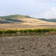Between Puglia and Basilicata (Italy): Country landscape at summ — Stock Photo #7187797