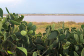 Margherita di Savoia (Puglia, Italy): Salt evaporation pond and — Zdjęcie stockowe