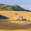Between Puglia and Basilicata (Italy): Country landscape at summ — Stock Photo #7213600