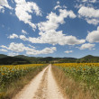 Landscape between Lazio and Umbria (Italy) at summer with sunflo — Stock Photo #7236004