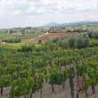 Landscape with vineyards at summer near Montepulciano (Siena, Tu — Стоковая фотография