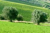 Krajobraz parku przyrody atri (teramo, abruzja, włochy), w lecie — Zdjęcie stockowe