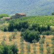 Farm in Tuscany near Artimino - Stock Photo