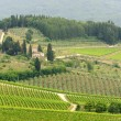 VIneyards of Chianti (Tuscany) — Stock Photo