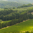 VIneyards of Chianti (Tuscany) — Stock Photo #7706060