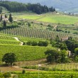 VIneyards of Chianti (Tuscany) — Stock fotografie
